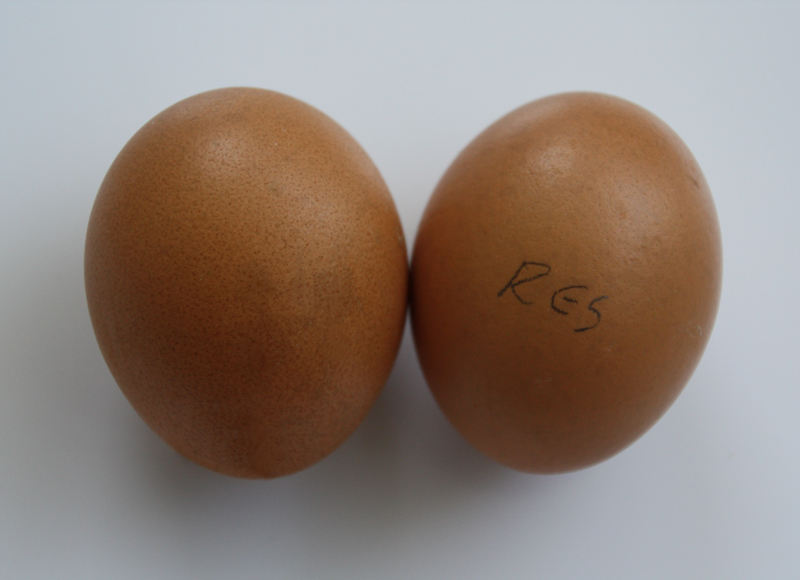 Metallic colored pair of eggs with a pop of red