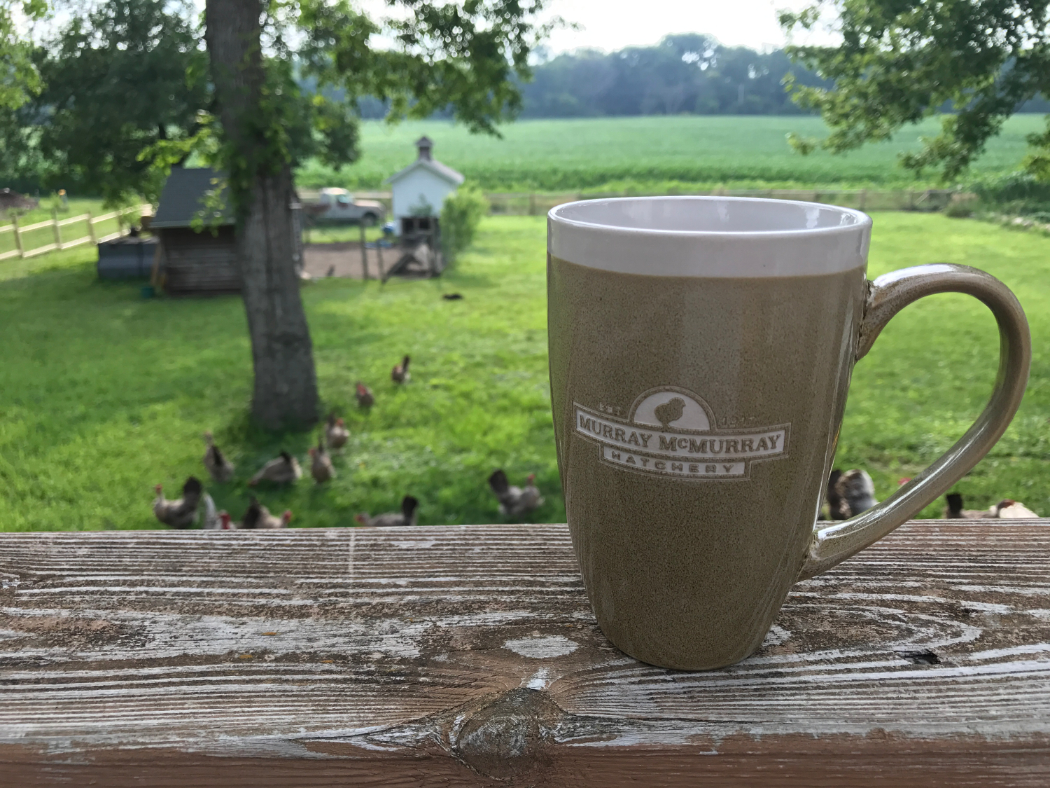 murray mcmurray hatchery collector mugs