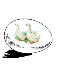 McMurray Hatchery Pekin Duck Hatching Eggs Jacky art drawing