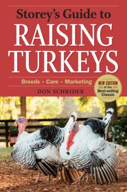 A Guide to Raising Turkeys