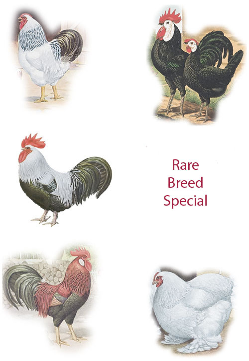Rare Breed Special