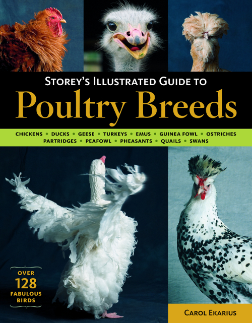 Storys Illustrated Guide To Poultry Breeds 7B17