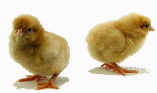 Buff chicks sex pics 83